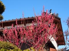 梅の花(たぶん、笑)