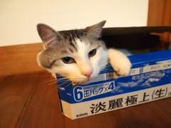 大好きな箱
