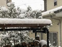 一晩で薪棚の屋根に積もった雪